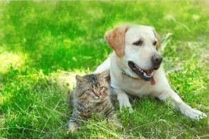 dogfood catfood netsuite erp crm food industry manufacturing cloud accounting